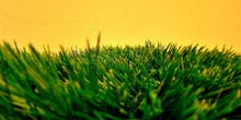 California's Drought Has Triggered a Synthetic Turf War