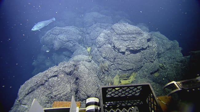 This image, taken from the ROV's POV, shows skate eggs around a hydrothermal chimney.