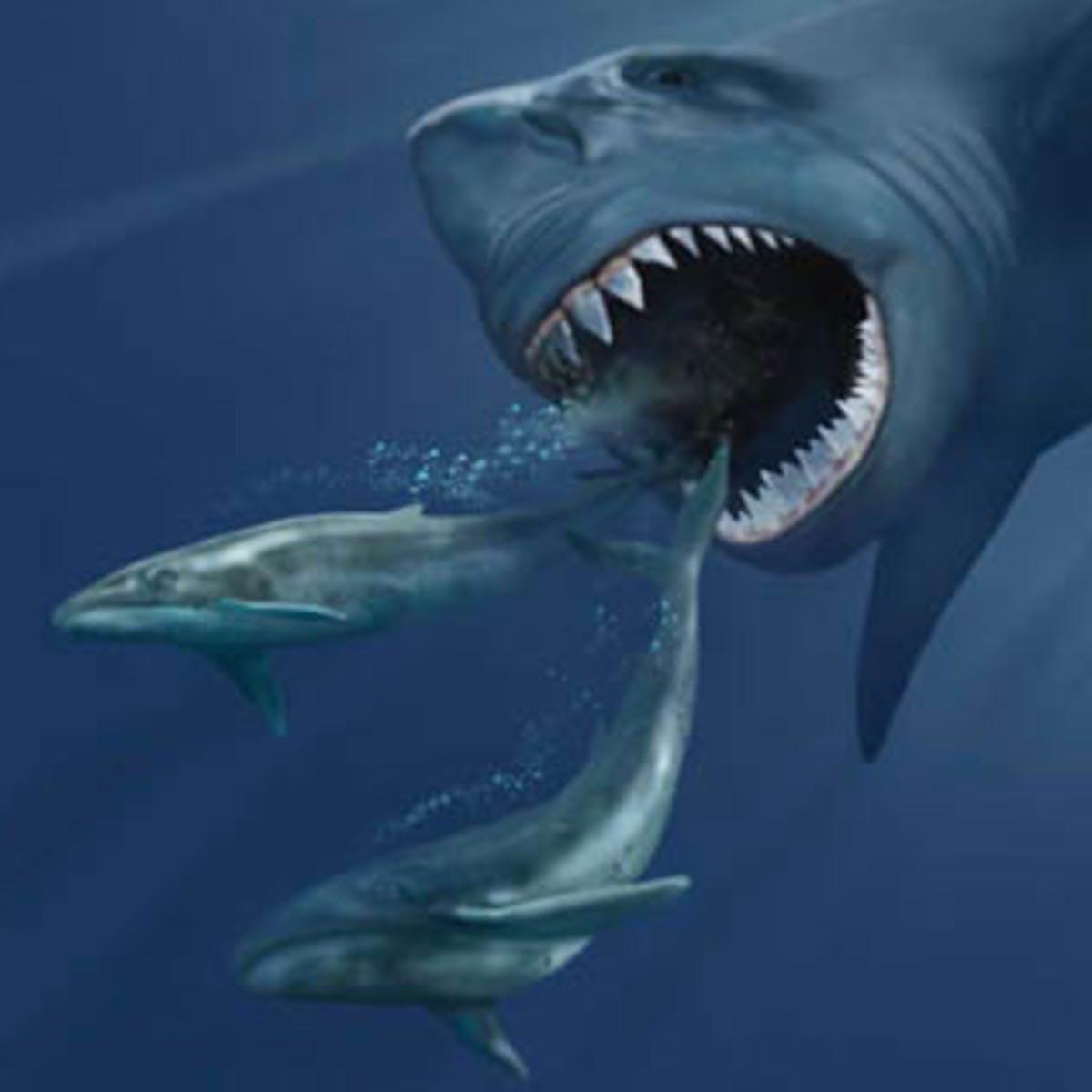 Science Spoils 'Meg' Movie: Jason Statham Can Kill Megalodon