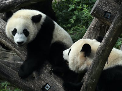 Good News for Pandas and Humpbacks Won't Save Planet Earth