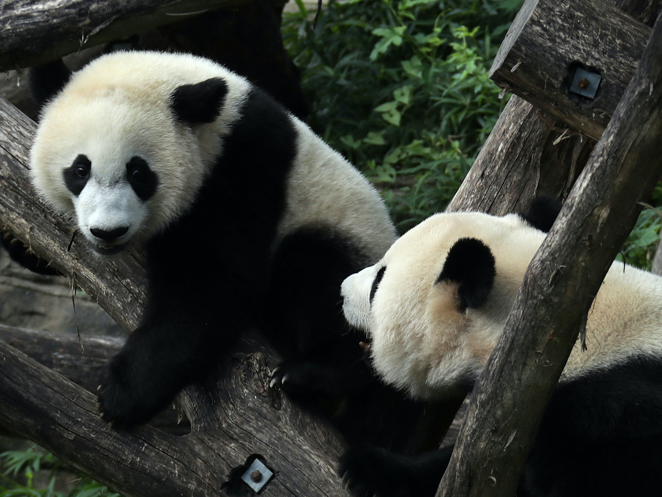 Good News for Pandas and Humpbacks Won't Save Planet Earth