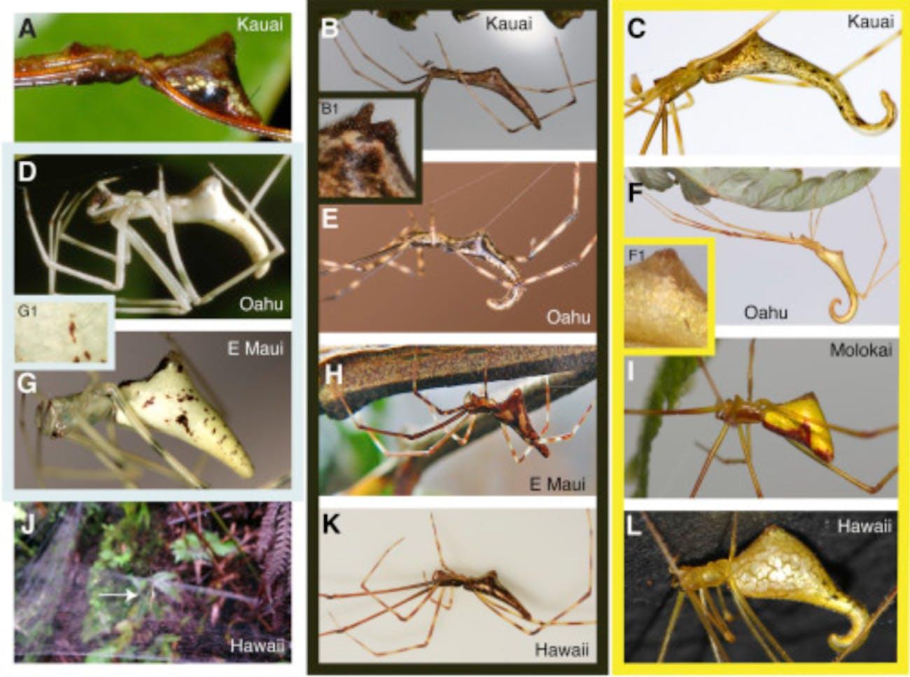Spiders, evolution