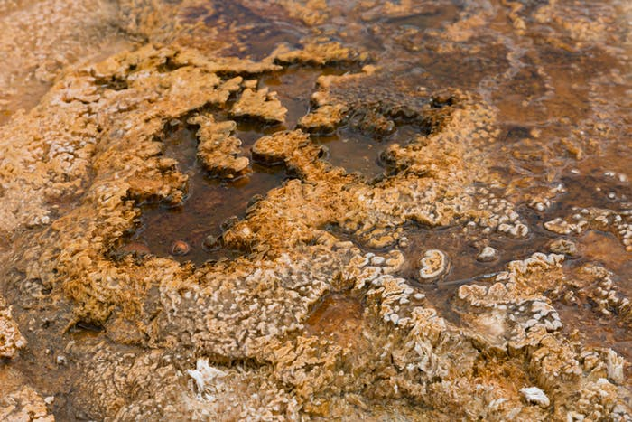 Another biological mat near the in Yellowstone National Park. The mat is composed of photosynthetic cyanobacteria that thrive in the microbial mats are formed in hot, acidic thermal springs at Yellowstone.