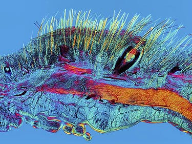 These 22 Science Images Are True Works of Art