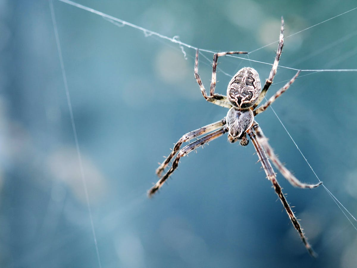 Why You Shouldn't Kill That Spider in Your Home