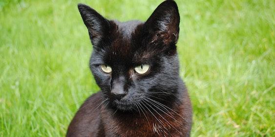 Black cat on #blackcatappreciation day.