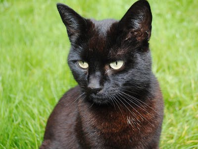 On #BlackCatAppreciation Day, Why Humans Have Hated Black Cats