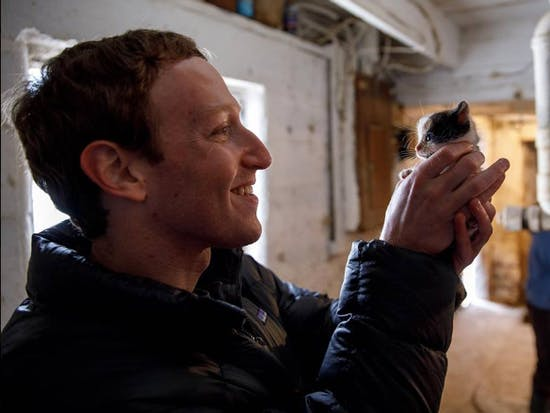 Mark Zuckerberg holding a barn kitten.