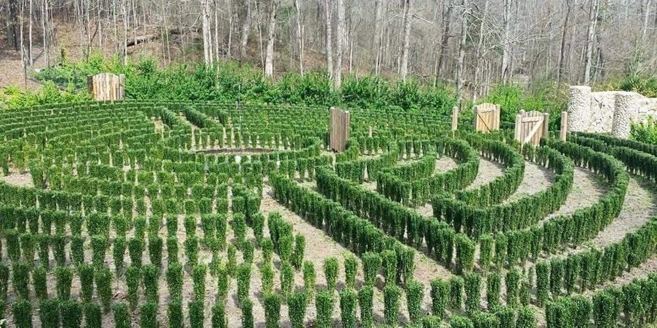 An early photo of John B. McLemore's hedge maze in Woodstock, Alabama.