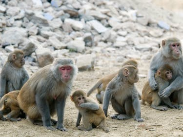 Science Helped Parapalegic Monkeys Walk, and Humans are Next