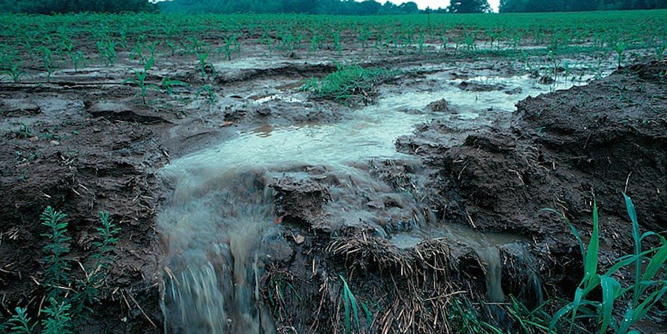 farm fertilizer, runoff, agriculture