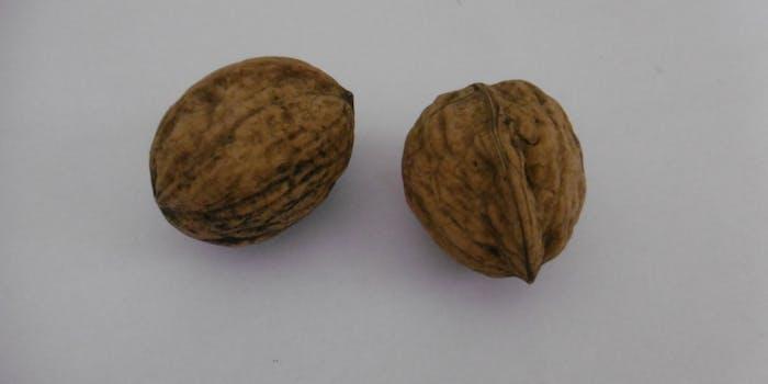 Two walnuts