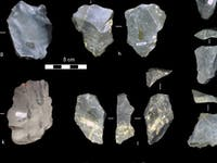Several of the newly identified stone tools – unearthed from a museum collection.