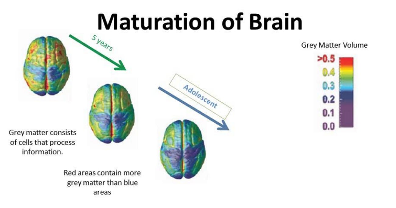 brain development grey matter teenagers