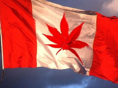 It's High Time the U.S. Cloned Canada's Medical Pot Model
