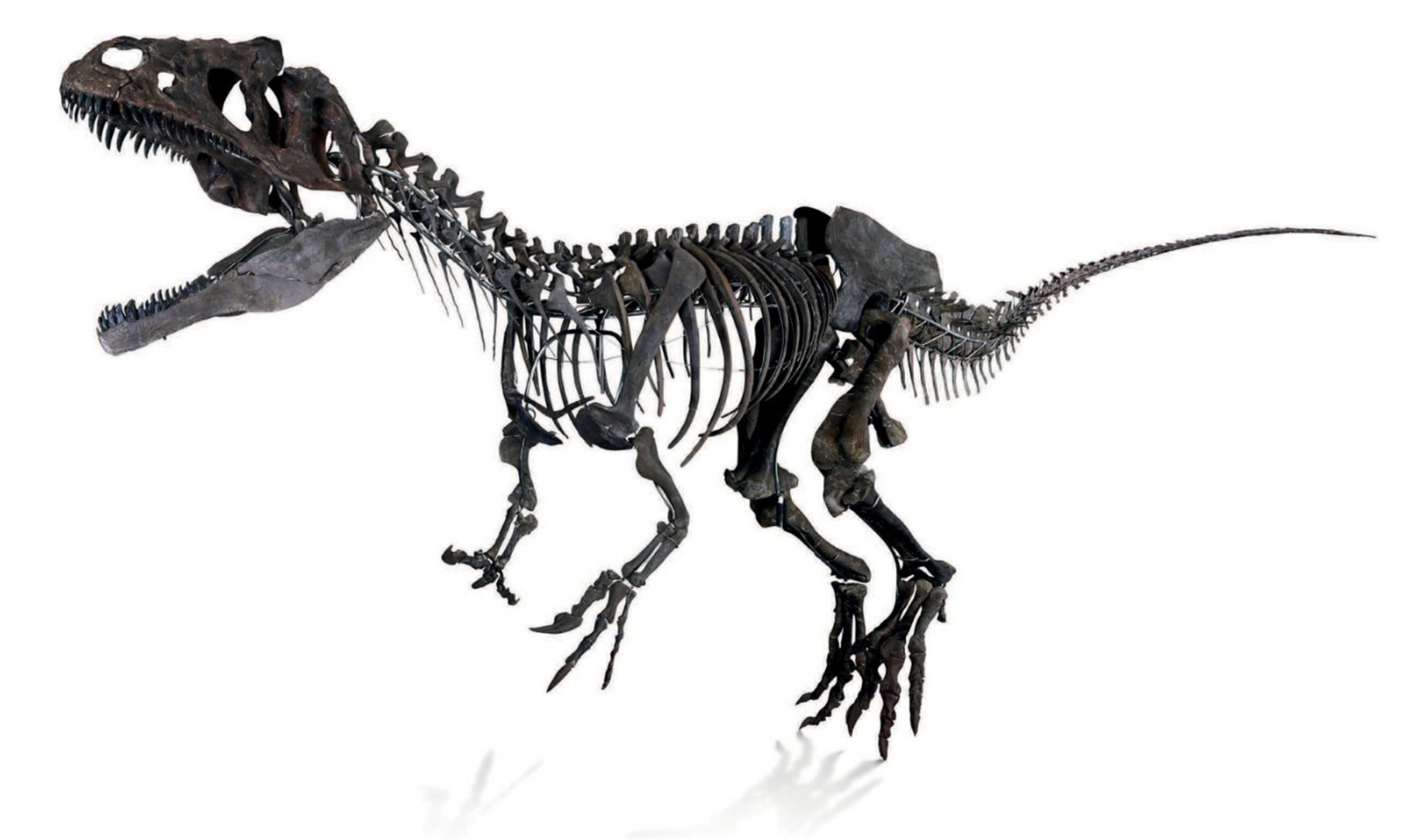 Auction of Mystery $2.3 Million Dinosaur Fossil Pisses Off Paleontologists