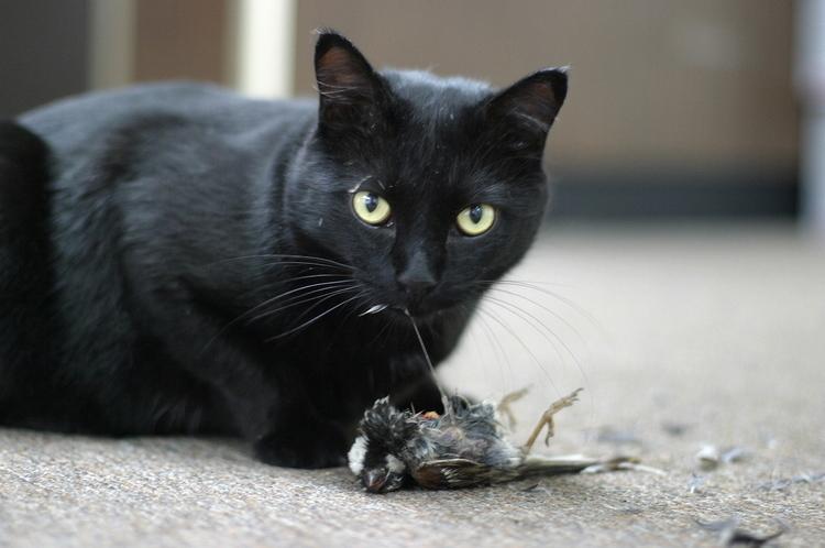 Cat eats bird.