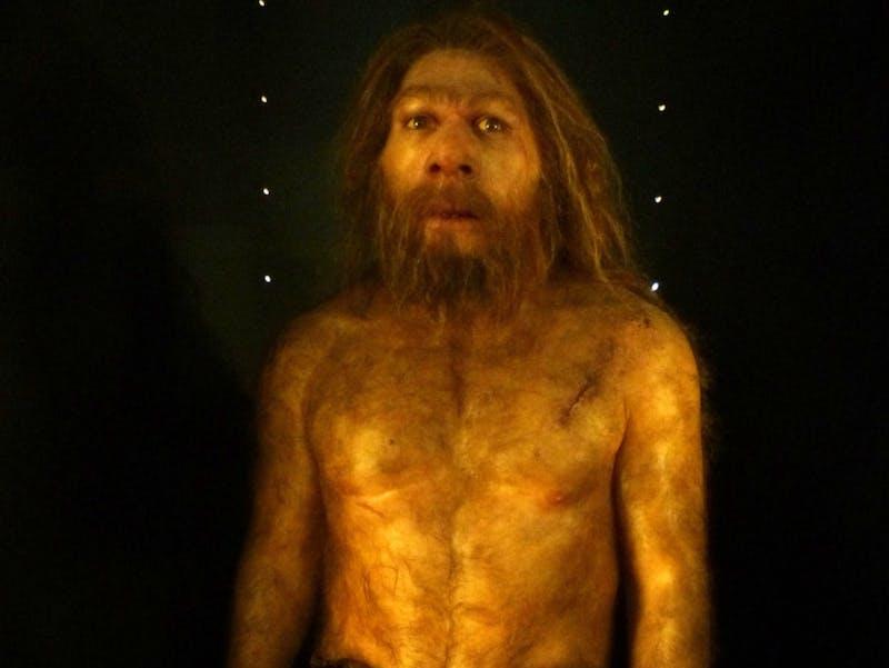MEH Neanderthal Daynes