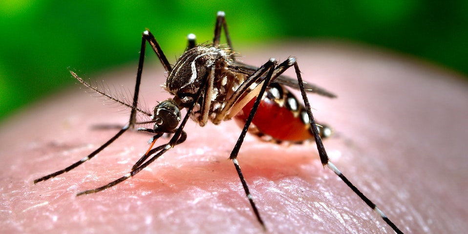 Science Explains What Kind of Blood Mosquitos Like Best