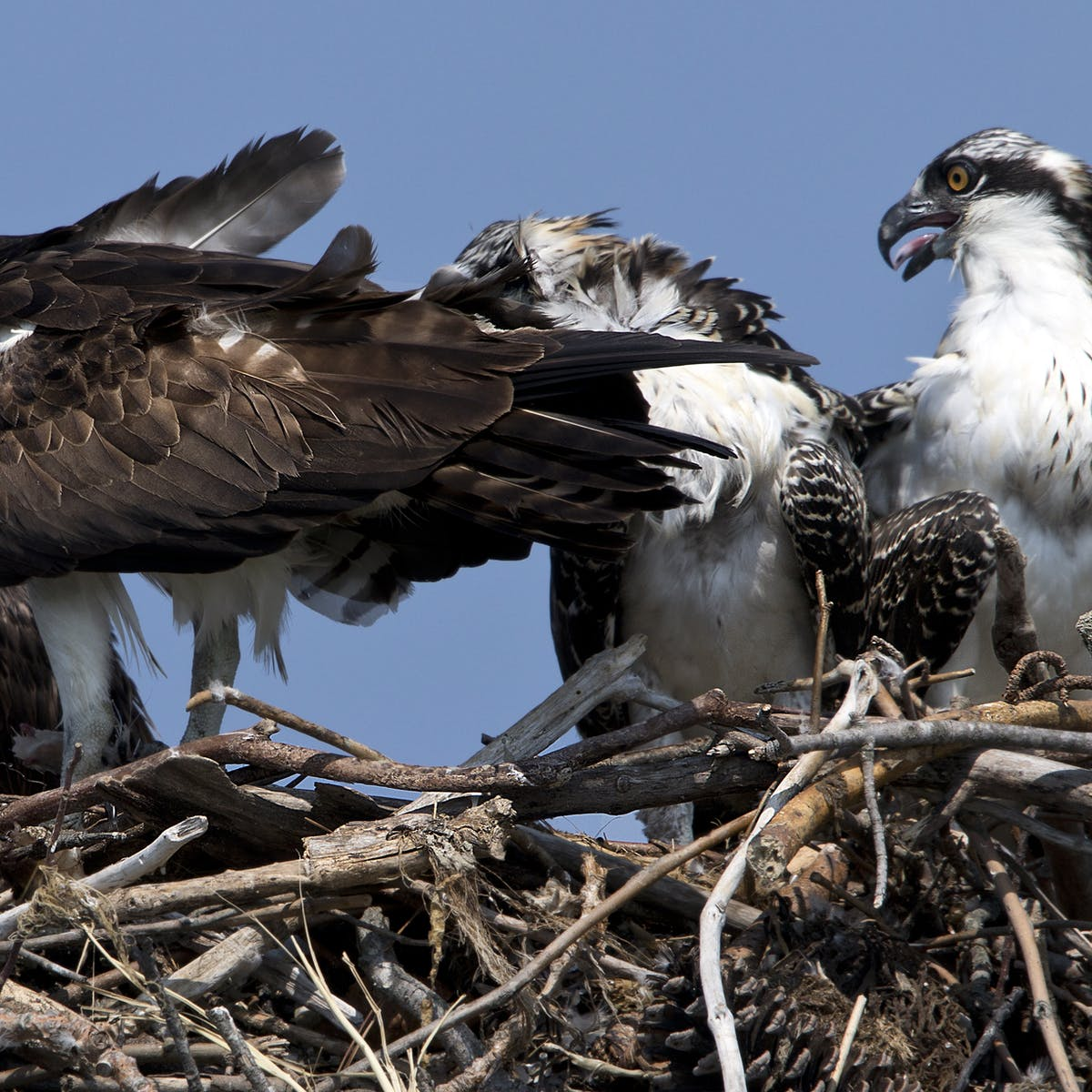 Osprey Eggs Reveal Hopeful News About Long-Lived