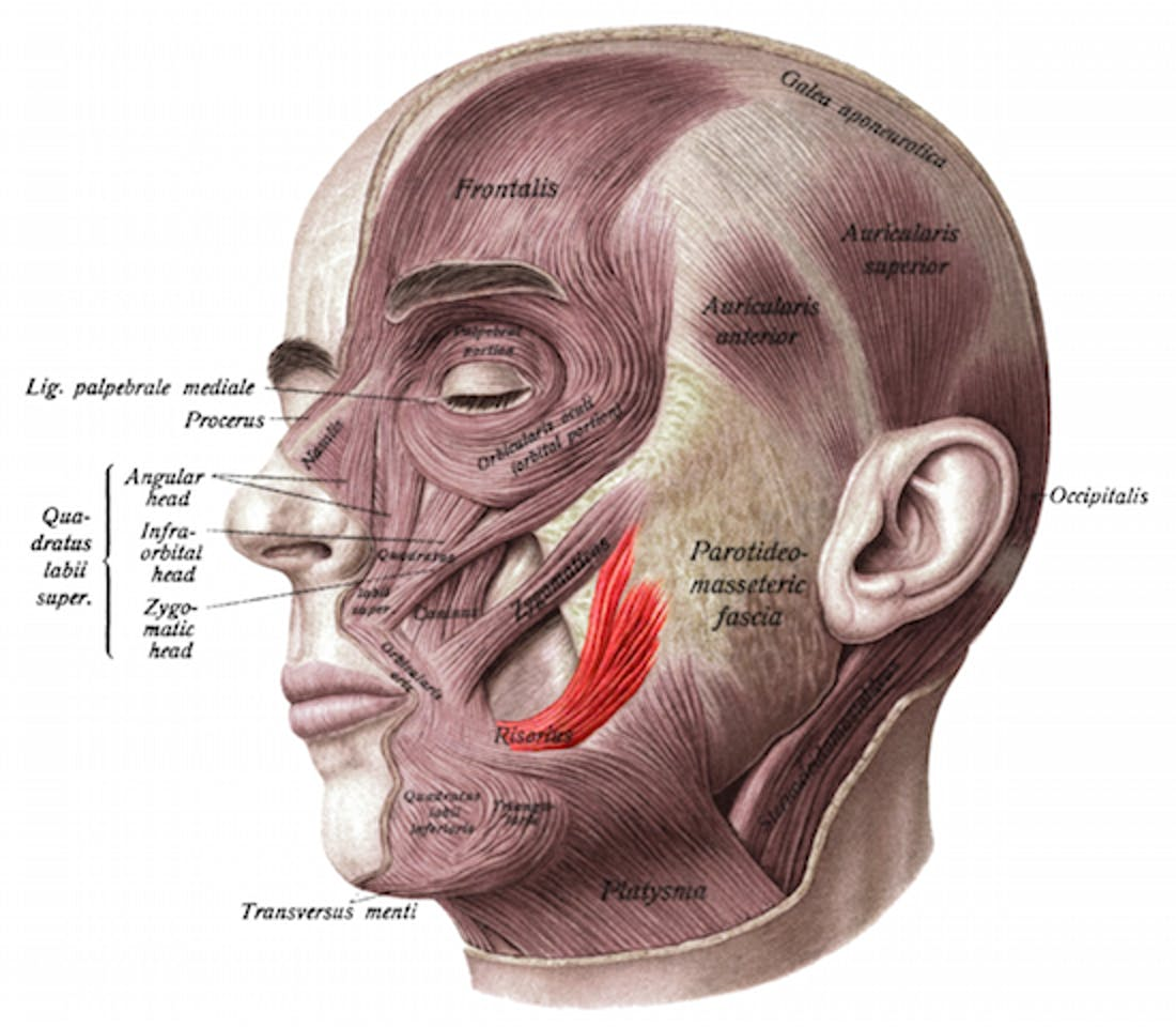 picture-of-facial-muscles