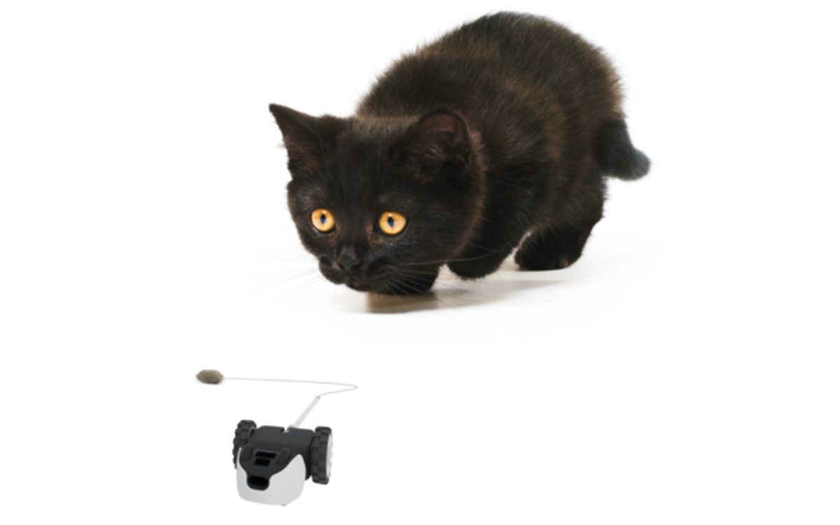 The Cat Toy That Struggles Like Real Prey
