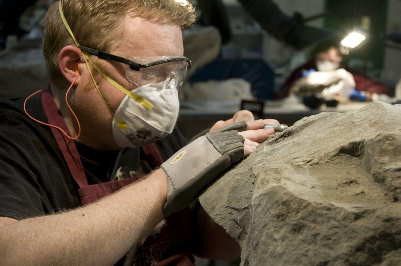 royal tyrrell museum ankylosaur nodosaur borealpelta markmichelli
