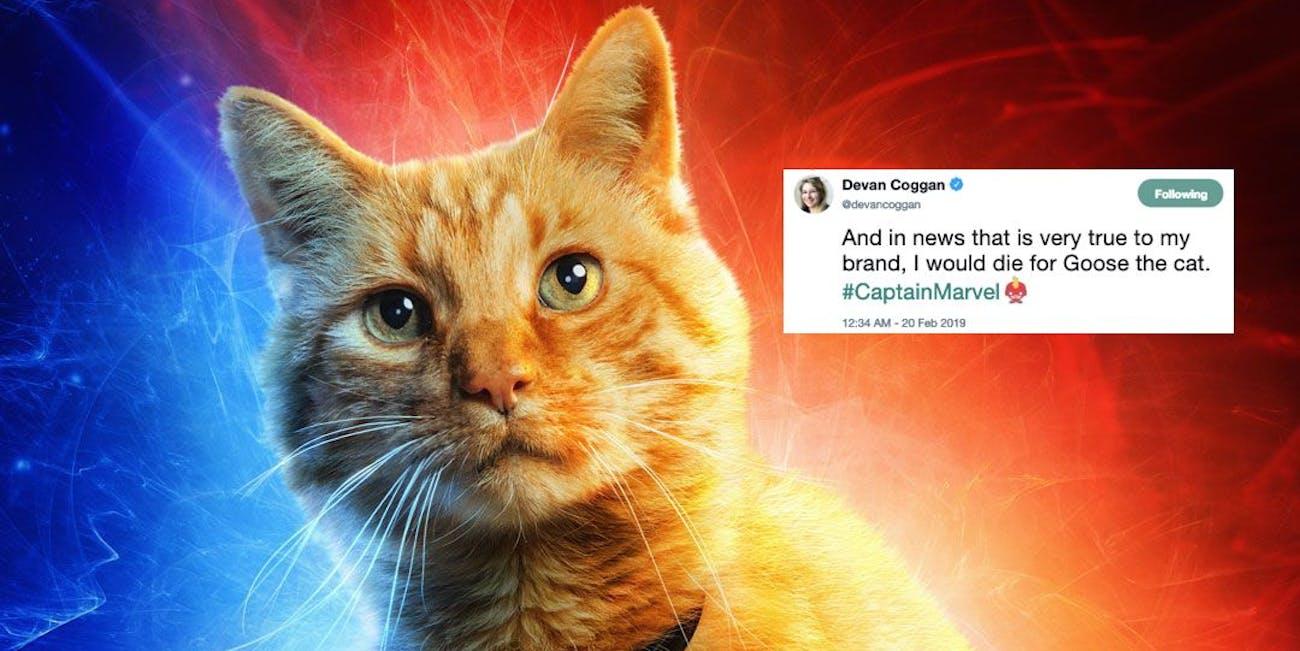 Captain Marvel Goose the Cat