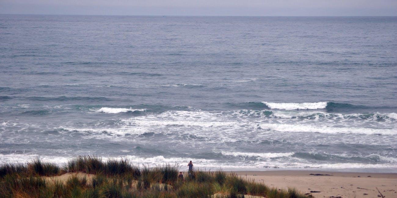 Surf Beach California Is An Epicenter Of Mysterious Shark