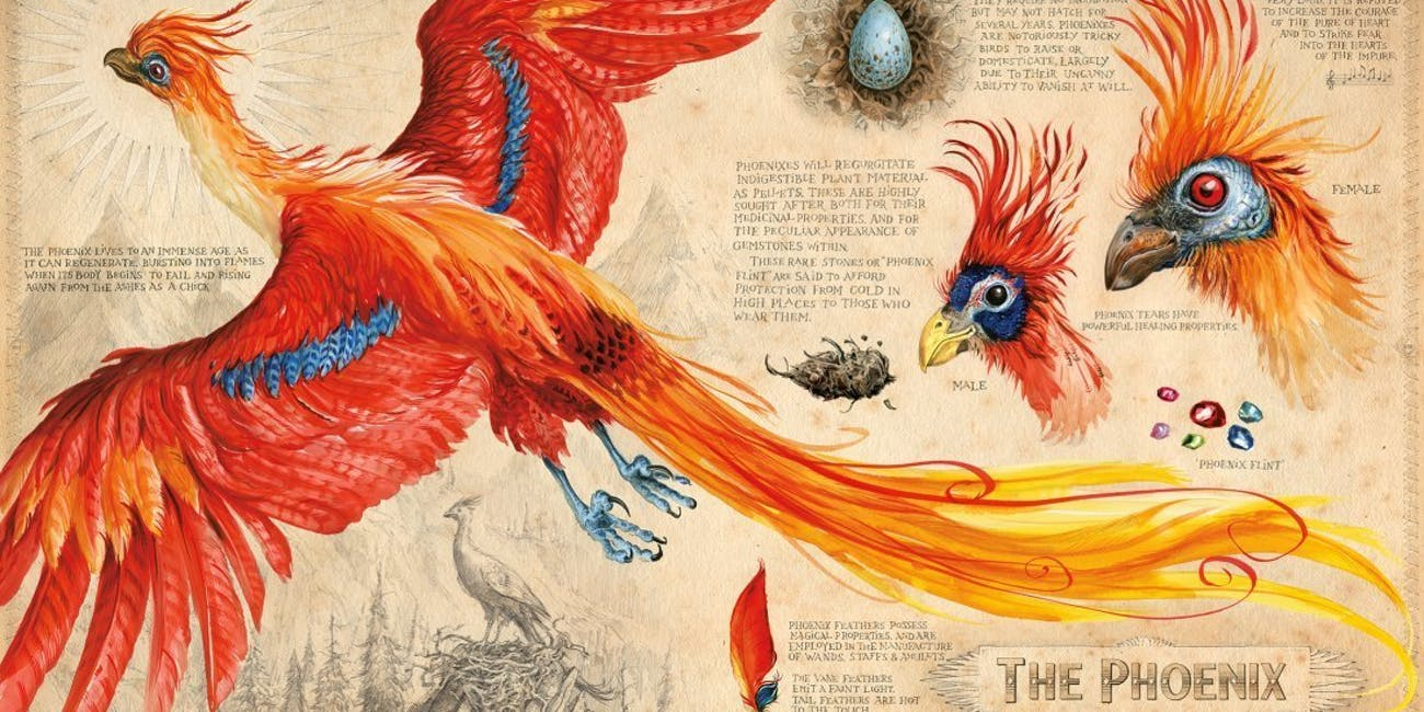 Illustration from Jim Kay's Illustrated Edition of 'Harry Potter and the Chamber of Secrets'