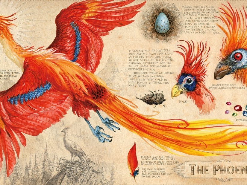 'Harry Potter' Phoenixes Regurgitate Healing Magic Gemstones