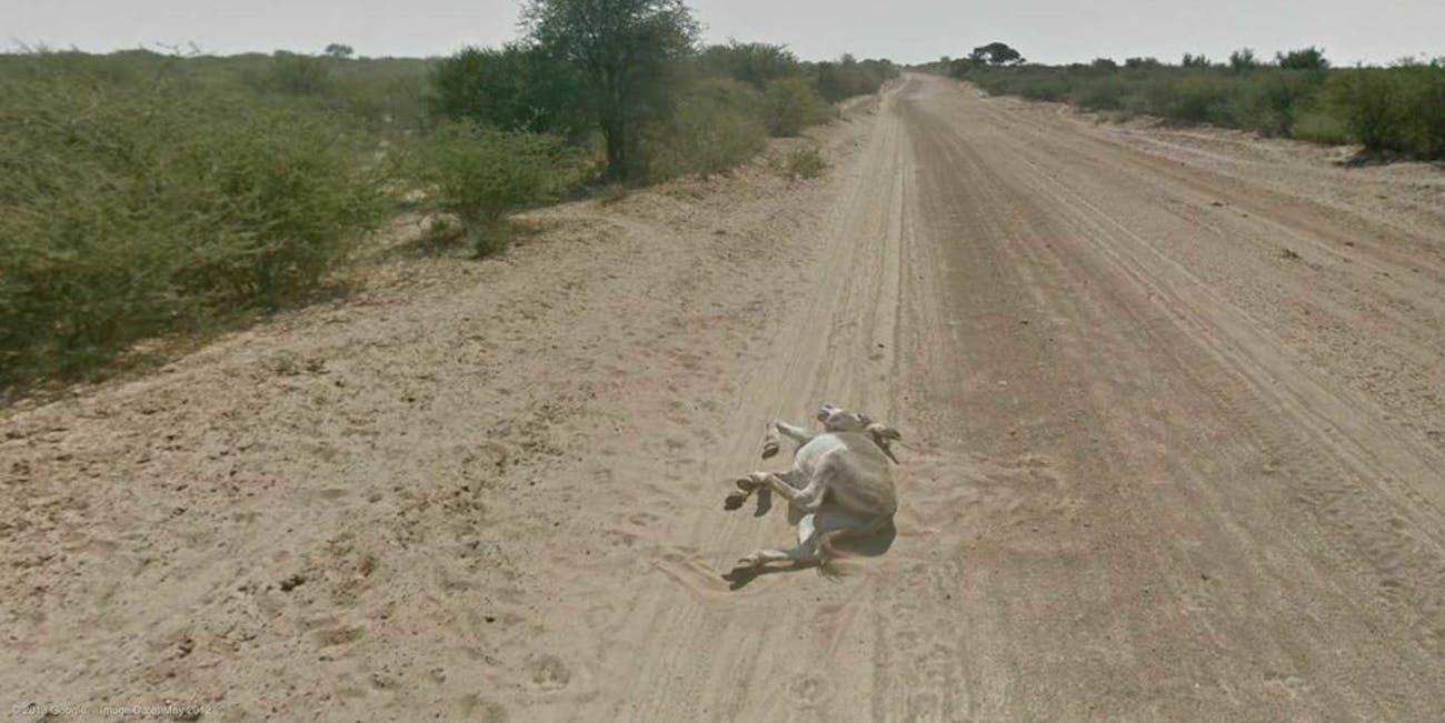 donkey google maps