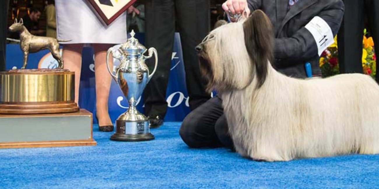 The National Dog Show airs on Thanksgiving.